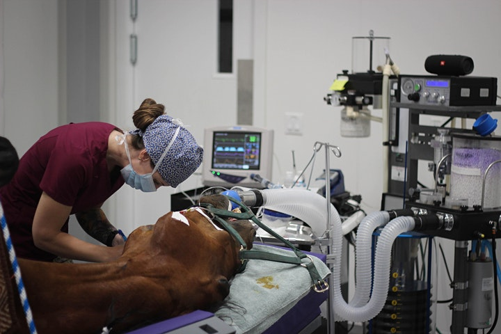 Equine Anesthesiology image