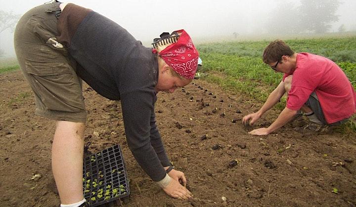 Volunteers Days (Onion Planting) image