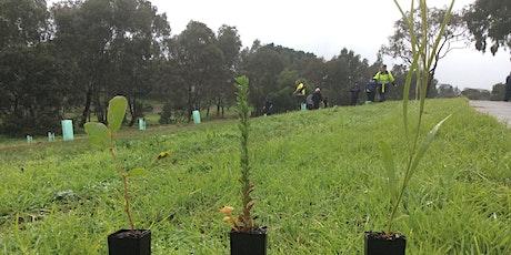 Community Planting Day at Caroline Chisholm Reserve tickets