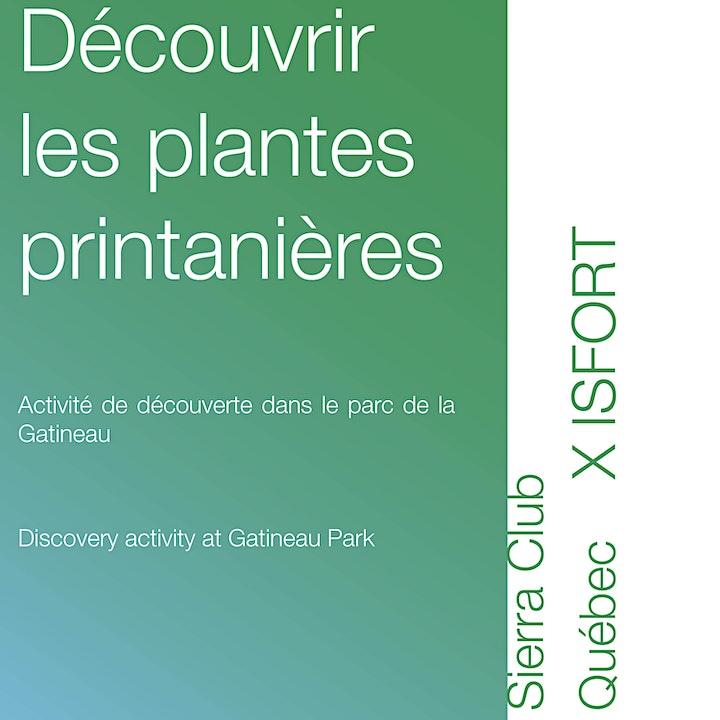Image de Les plantes printanières et l'utilisation historique des plantes