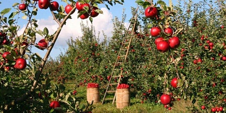 Summer Pruning & Care of Fruit Trees tickets