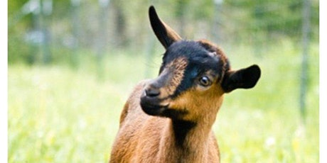 AFSN - Family Goat Yoga tickets