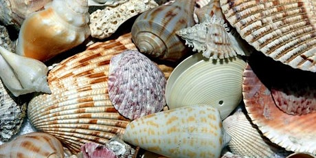 Paint on the Patio: Patriotic Seashells tickets