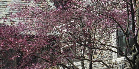 The 7th Sunday of  Easter 10:00 am Worship -- Trinity Church, Swarthmore tickets