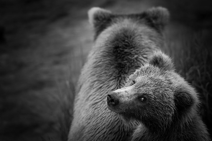 Photographing Wildlife Near and Far with Kristi Odom image