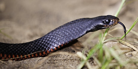 NaturallyGC Reptile Scales and Tails tickets