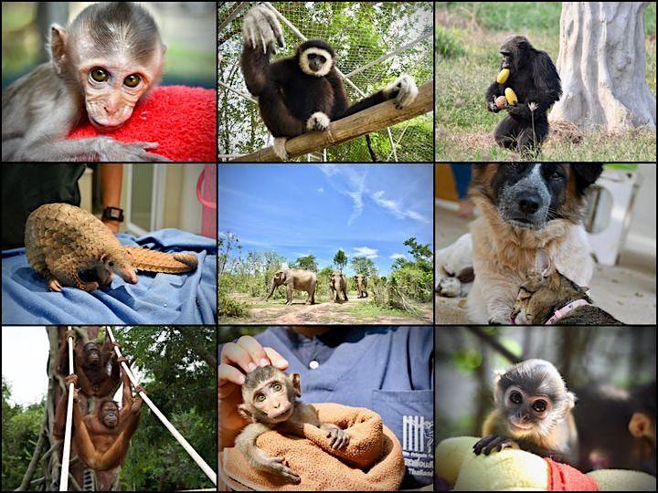 Wildlife Friends Foundation Thailand Fundraiser image