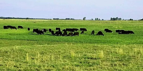 Profitable Grazing & Low Stress Livestock Handling billets