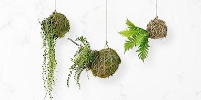 Kokedama moss ball workshop – Adult event