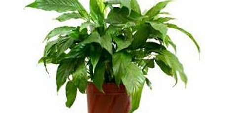House Plants for Beginners - Online Course - Community Learning tickets