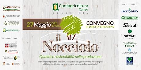 Il nocciolo: qualità e sostenibilità nella produzione biglietti