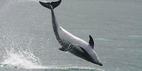Mini-Marine Biologist - Wales Nature Wales tickets