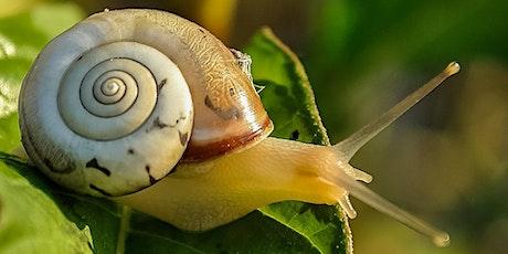 Rendez-vous au jardin : protocole escargot billets