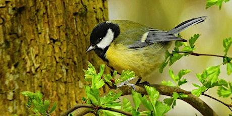 Rendez-vous au jardin : protocole oiseaux des jardins billets
