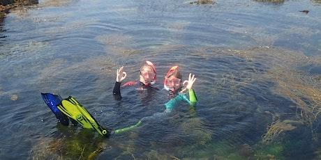 Adults Only Snorkel Safari tickets