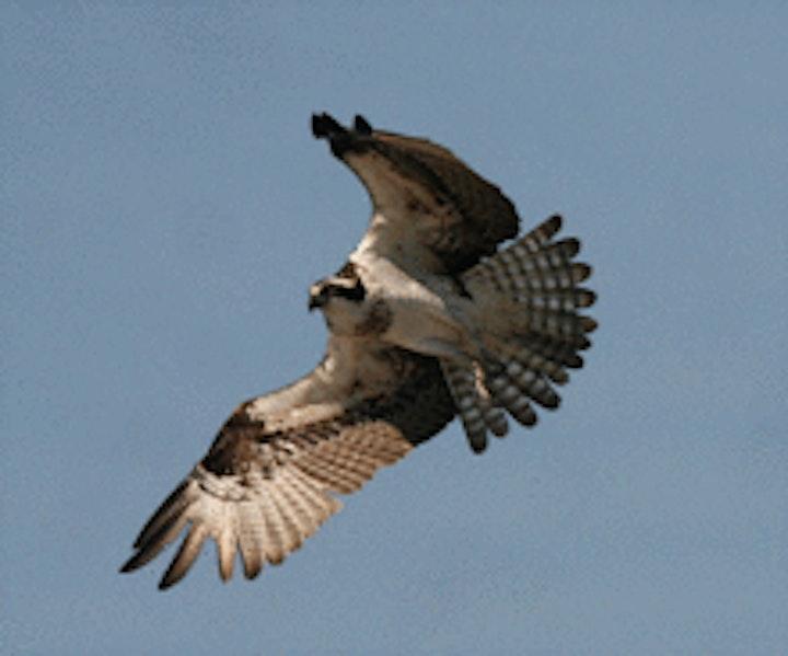 Norwalk Harbor Bird Watching Tour image