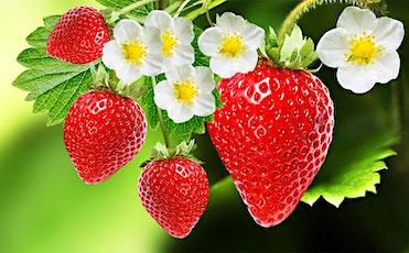 Strawberry Supper tickets
