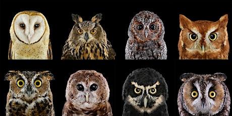 Internation Owl Day Celebration tickets