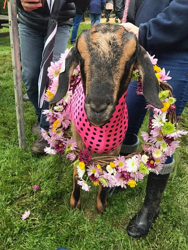 Annual Goat Derby Saturday, September 25th image