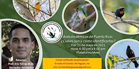 Aves endémicas de Puerto Rico: ¿Cuáles son y cómo identificarlas? entradas