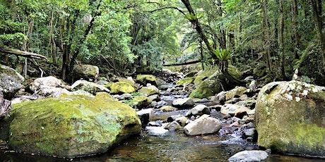 Rainforests of the Illawarra tickets