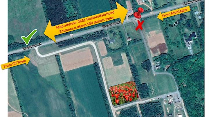 2021 Monks' Tulip Field image