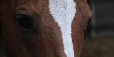 Calmness, Connection, Compassion...through the Way of the Horse tickets