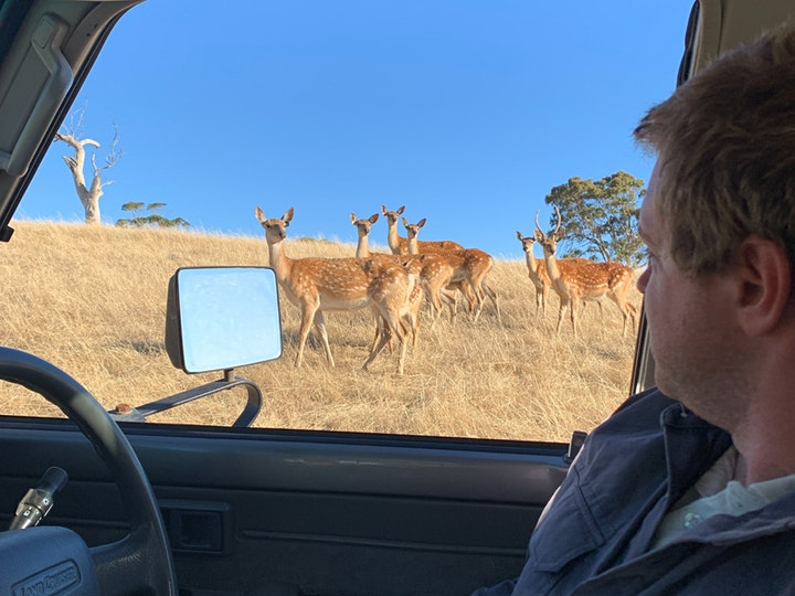 SPIRIT OF THE STAG - Deer Farm Tour image