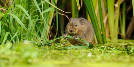 Wild Families: Suffolk Big 6 - Watervole (ECC2511) tickets
