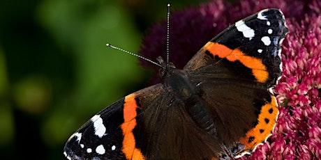 Brilliant Butterflies tickets