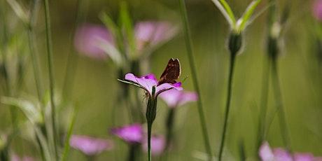 Weleda Garden Tour & An Introduction to Biodynamic Gardening tickets