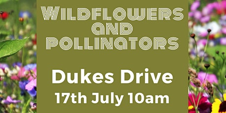 Wildflowers and pollinators of Dukes Drive guided walk tickets