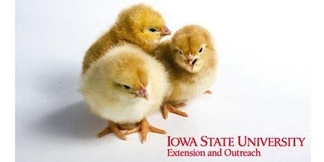 Raising Backyard Chickens Virtual Workshop tickets