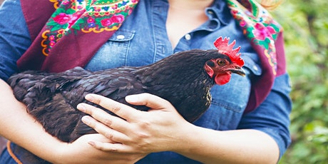 How To - Urban Backyard Chickens (Webinar) tickets