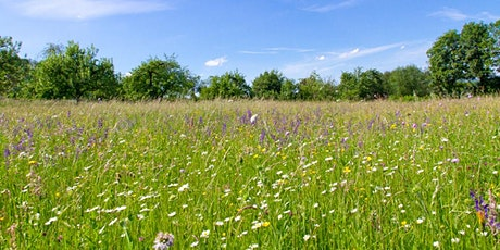 Meadow Meander and Plant Workshop tickets