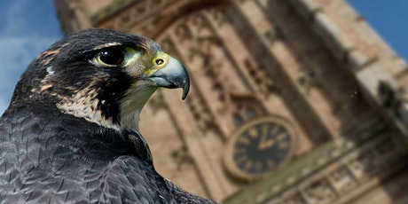 Live Webinar: Derby Cathedral's Urban Peregrines 'Birds in Paradise' bilhetes
