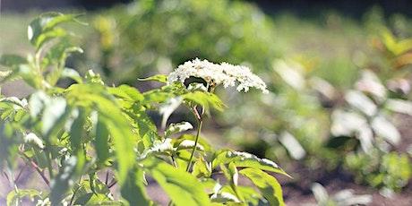 Elderberry & Elder Flower Field Day tickets