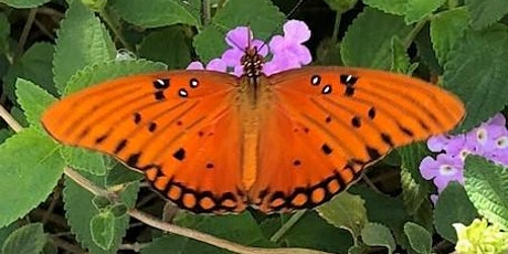Butterfly Release at D.A.M.N. Good Lavender Farm & Apiary tickets