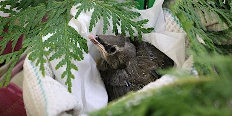 Virtual Explorer Day - Wild Bird Rehabilitation Centre (Virtual Visit) tickets