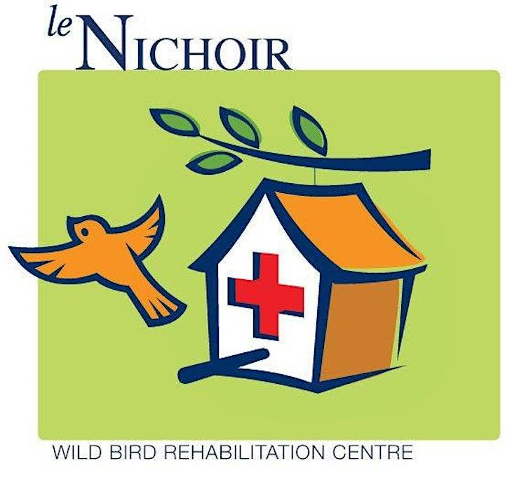 Virtual Explorer Day - Wild Bird Rehabilitation Centre (Virtual Visit) image