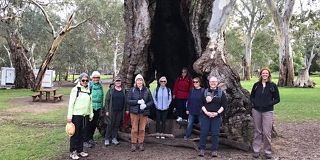 FREE Wednesday Walks for Women - Belair 7th of July tickets