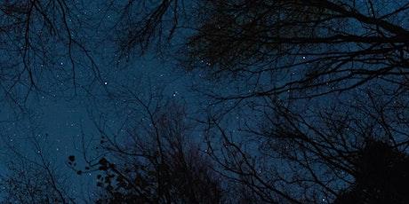 Sylvan Nights  - A Star Lit Walk with artist Steve Geliot tickets