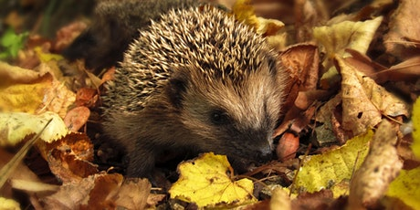 Discovering Hedgehogs in Dublin tickets