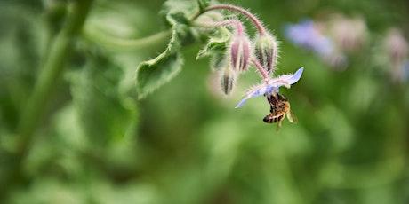 Atelier-conférence : À la découverte du monde des abeilles billets