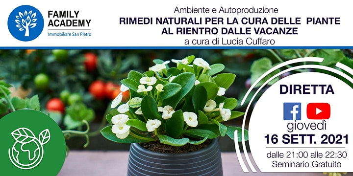 Immagine RIMEDI NATURALI PER LA CURA DELLE PIANTE AL RIENTRO DALLE VACANZE