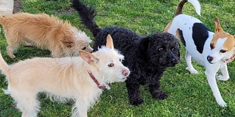 Learn & Play Small Dog Social 6/19/21 tickets