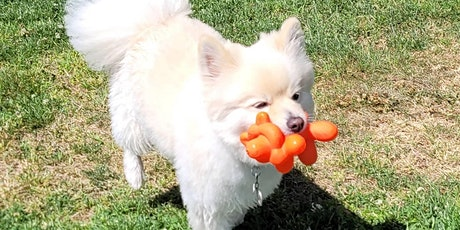Learn & Play Small Dog Social 6/26/21 tickets