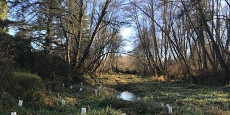 Yelm Shoreline Blackberry Removal Work Party-August 4, 2021 tickets