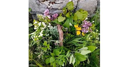 Wild plant foraging workshop tickets
