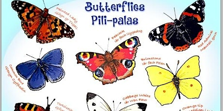 Butterfly making workshop with the Museum of Cardiff for Grangetown Zoo tickets